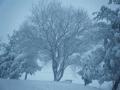 Nevicata 2012_2